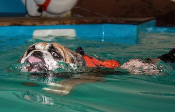 schwimmen anstrengender als laufen